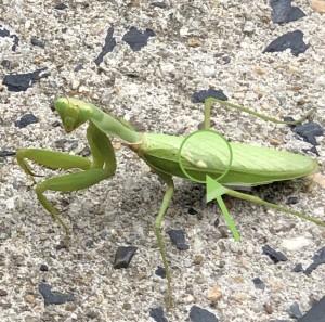 旭寝具にいる昆虫